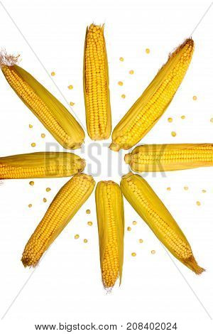 Corn isolated on white background. Collection of corn. Abstraction in the form of a star from corn close-up. View from above