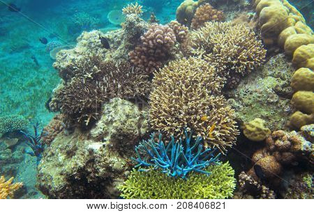 Underwater landscape with colorful corals. Coral undersea photo. Seashore texture. Coral closeup. Sea bottom with coral ecosystem. Tropical seashore snorkeling. Marine relief. Tropic lagoon wildlife