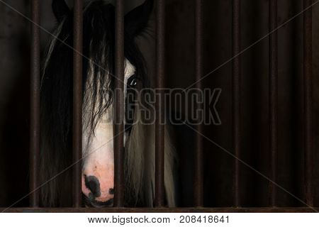 Horse in the cage of a stable.