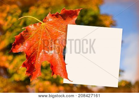 Place for recording (sticky note) near the maple leaf. Autumn theme