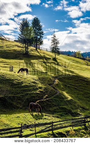 Horses Grazing On The Gassy Slope Near The Trees