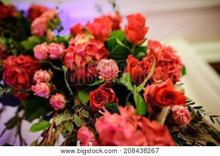 Beauteous pink flower composition with a lot of green leafs on the light purple and white background