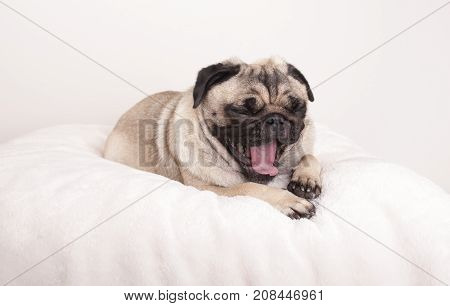 cute pug puppy dog lying down yawning on fuzzy blanket