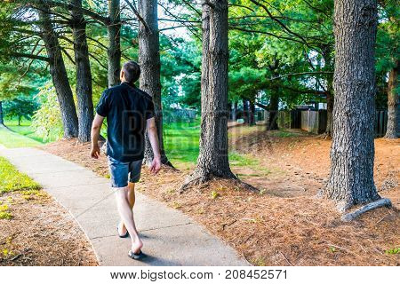 Sidewalk with row of trees in orange mulch in suburban neighborhood with path and young man walking