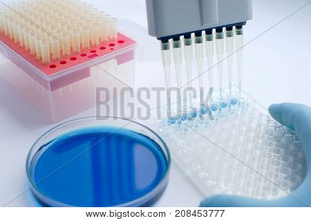 Scientist working with multichannel pipette. Experimental labboratory. Analysing Qualitative Research