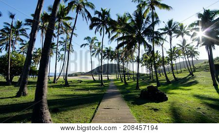 Palm trees on the Cook Islands of Polynesia