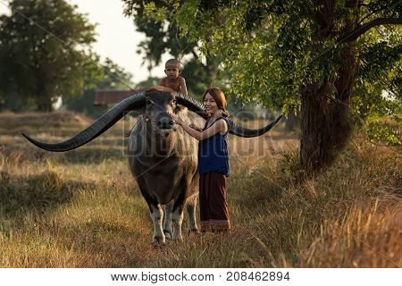 Farmer family with buffalo in countrysidel Asia.