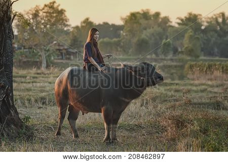 Rural women sitting on buffalo at farmlandAsian women's rural lifestyle