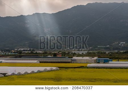 Rays of sunlight breaking trough clouds and shinning brightly on hillside of rural community with golden fields of rice in the foreground.