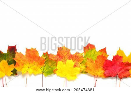 Autumn leaves border on white background. Season composition for mock ups template with text place.