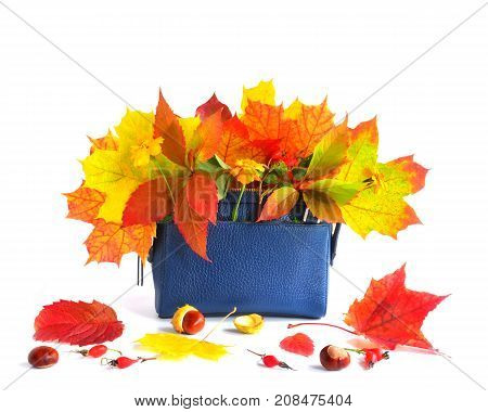 Autumn Leaves And Bag