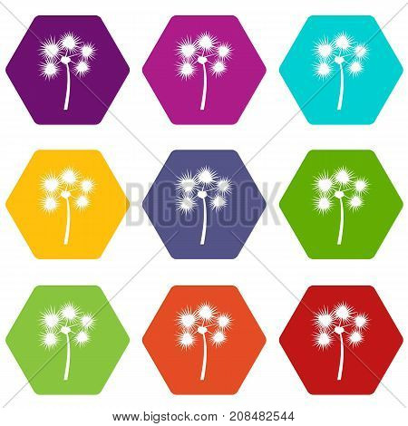 Spiny tropical palm tree icon set many color hexahedron isolated on white vector illustration