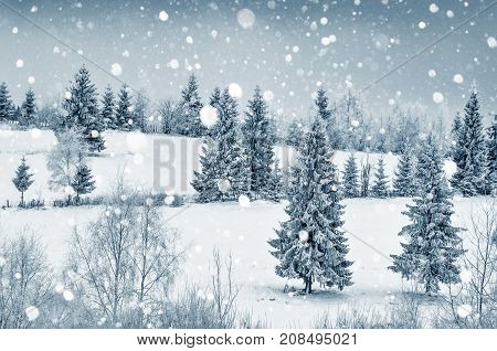 Mysterious Winter Landscape With Fir Trees