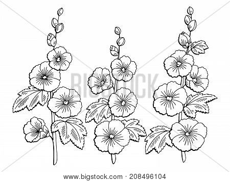 Mallow flower graphic black white isolated sketch illustration vector