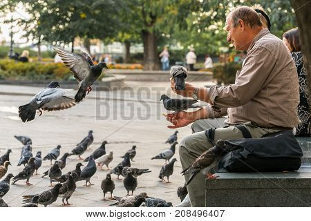 Old caucasian male sitting on a bench feeding city pigeons in Budapest. Budapest Hungary - September 27 2017: Daytime, side view of an old caucasian male at an outdoor plaza in the center of Budapest Hungary feeding city pigeons. Sitting on a stone bench