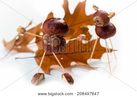Chestnut toy isolated on white background .