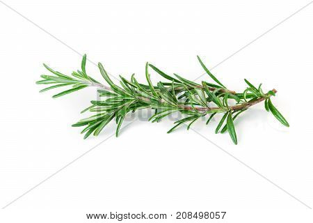 Fresh organic Rosemary isolated on white background