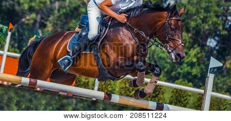 Bay dressage horse and rider in white uniform performing jump at show jumping competition. Equestrian sport background. Bay horse portrait during dressage competition.