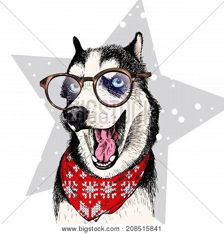 Vector portrait of Siberian husky dog wearing winter bandana and glasses. Isolated on star and snow. Skecthed color illustraion. Christmas, Xmas, New year. Party decoration, promotion, greeting card.