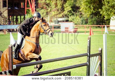 Young man jockey ride beautiful brown horse and jump over the crotch in equestrian sport closeup