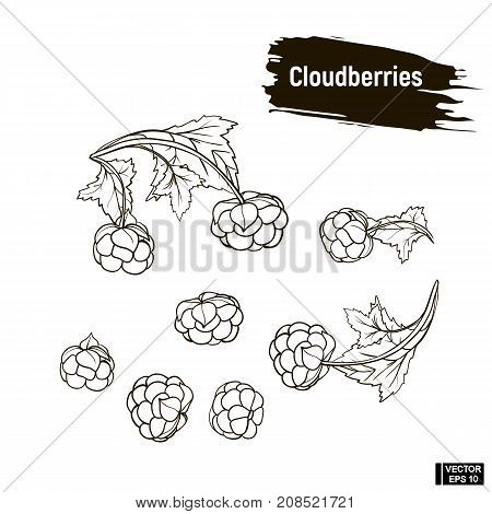 Outline Berry, Cloudberries Sketch.