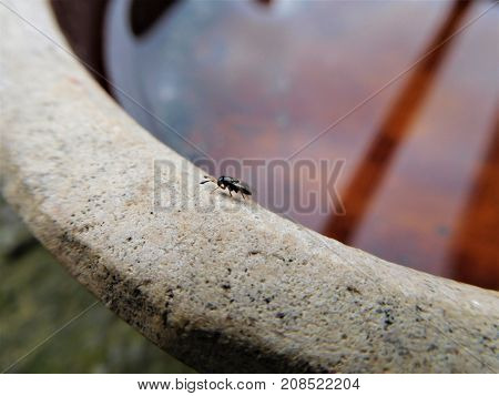 The small fly on the edge of the bowl. In the background we see a shallow pool who show us sky and sun
