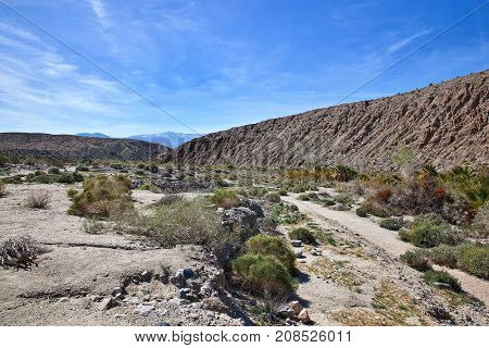 Part of the San Andreas Fault Zone at the Thousand Palms Oasis Preserve