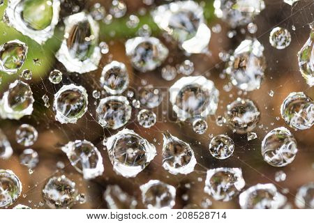 Close up of big dew water drops on a spider web near ground in the garden.