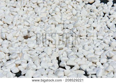 White Gravel Pebble Stone Texture For A Garden Pathway