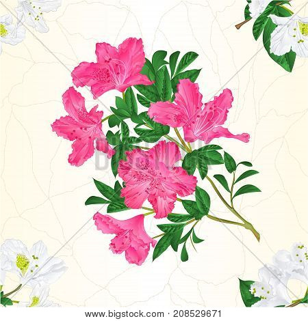 Seamless texture white and pink rhododendron twig mountain shrub vintage vector illustration editable hand draw