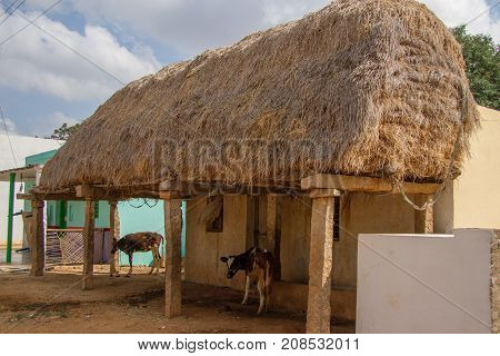 photo of hay storage Indian style with cows underneath
