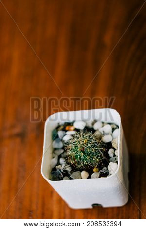 Cactus on wooden table after water pouring show humid and drops