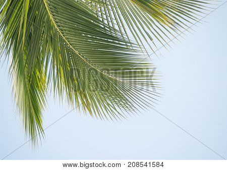 palm tree isolated on sky background