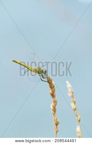 The image of a dragonfly