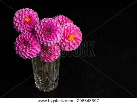 Bouquet of pink pompom dahlias in a crystal glass.