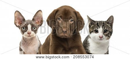 Close-up of cats and dog, isolated on white