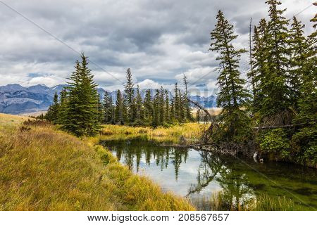 Journey through the Rocky Mountains of Canada. Shallow-water lakes, firs and mountains. The valley along the Pocahontas road. Concept of active and ecological tourism