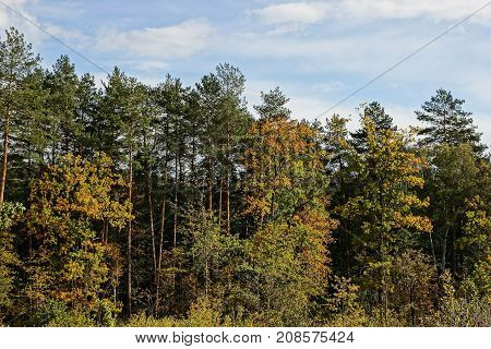 deciduous and coniferous trees at the edge of the forest