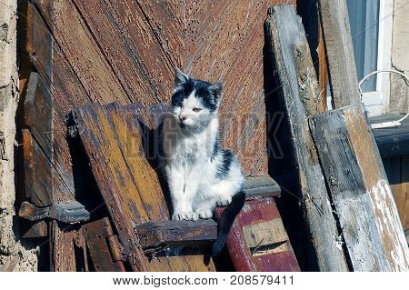 spotted cat sits on a wooden board near the wall of the house