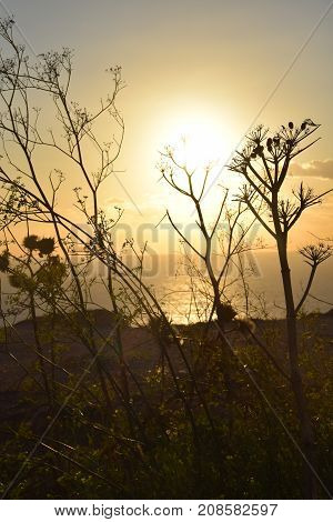 Sunset view in the sea through some plants