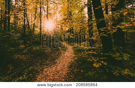 Autumn Scene With Sun Light In Forest