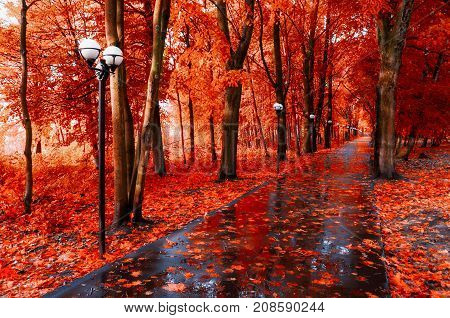 Autumn landscape. Red autumn trees and fallen autumn leaves on the wet footpath in autumn park alley after rain. Creative filter applied. Colorful autumn landscape with autumn trees in rainy weather. Autumn alley