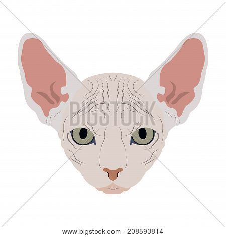 Isolated Sphynx cat avatar on a white background, Cat breed, Vector illustration