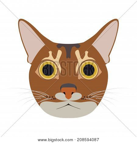 Isolated abyssinian cat avatar on a white background, Cat breed, Vector illustration