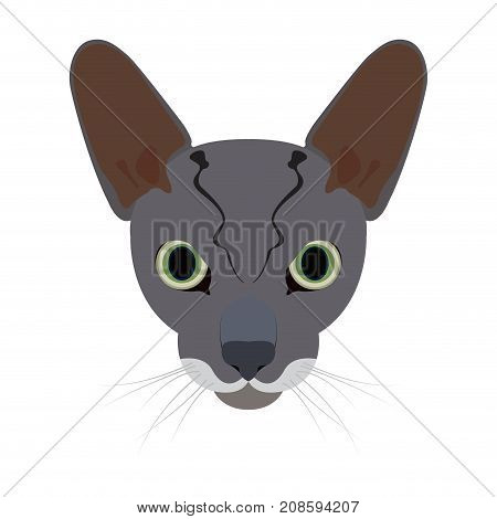 Isolated cornish rex cat avatar on a white background, Cat breed, Vector illustration