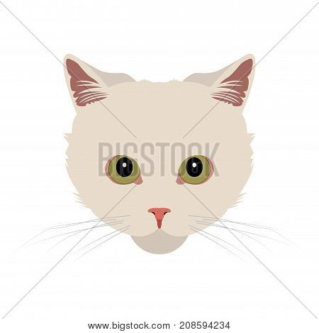 Isolated Turkish angora cat avatar on a white background, Cat breed, Vector illustration