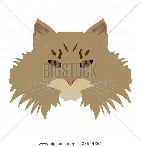 Isolated siberian cat avatar on a white background, Cat breed, Vector illustration