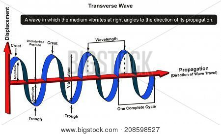 Transverse Wave Infographic Diagram showing structure with displacement and propagation axis with all parts including crest amplitude vibration wavelength complete cycle for physics science education