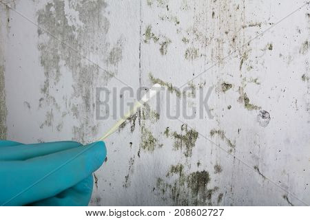 Close-up Of Person's Hand Holding Cotton Bud To Get Fungus Samples From Wall