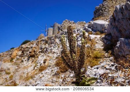 Ruins of encient windmills built in 15th century. Lassithi Plateau Crete Greece. Most typical characteristic of the Plateau.In the past they numbered thousands making up a magnificent landscape.